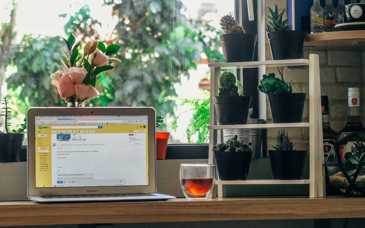 MacBook Air on a desk at home next to a range of plants and a cup of tea