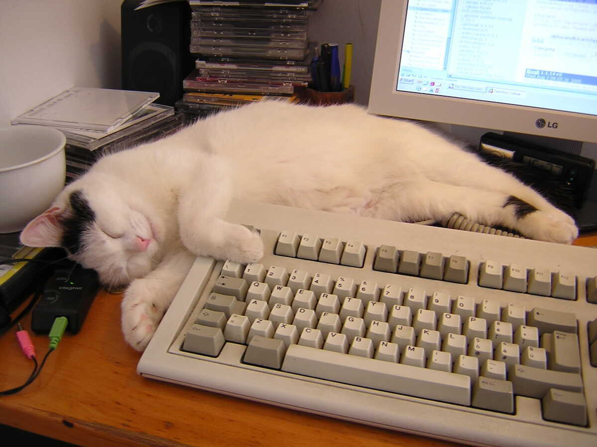 White cat taking a nap next to the keyboard on the home office desk